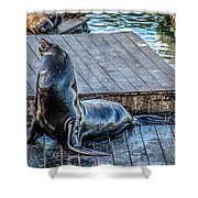 Pier 39 Shower Curtain