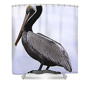 Pier Pelican Ponce Inlet Shower Curtain