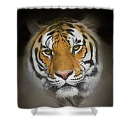 Piercing Shower Curtain