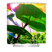 Piercing Sea Grapes Shower Curtain