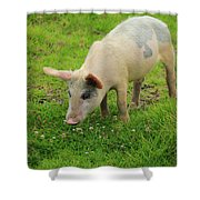 Pig In Wildflowers Shower Curtain