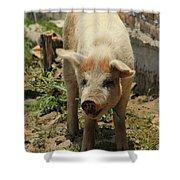 Pig On A Farm Shower Curtain