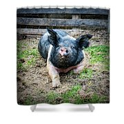 Pig Out Shower Curtain