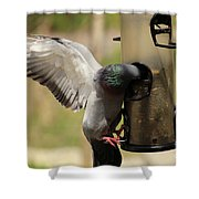 Pigeon And Feeder Wings Spread Shower Curtain