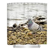 Pigeon Close To The River Shower Curtain