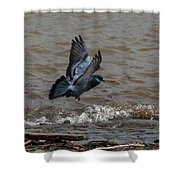 Pigeon Getting Ready To Land Shower Curtain