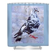 Pigeon On Ice  1 Shower Curtain