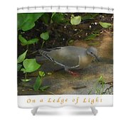 Pigeon Poster Shower Curtain