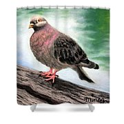 Pigeon Toes Shower Curtain