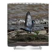 Pigeon With Its Wings Up Shower Curtain