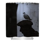 Pigeons Of Prague Shower Curtain by Sharon Coty