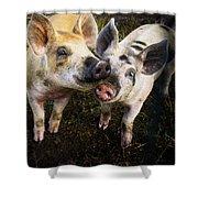 Piggy Love Shower Curtain