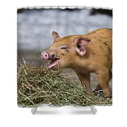 Piglet Eating Hay Shower Curtain