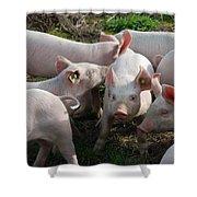 Piglets Shower Curtain