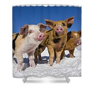 Piglets In Snow Shower Curtain