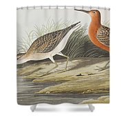 Pigmy Curlew Shower Curtain
