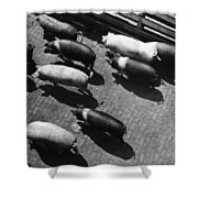Pigs Being Corralled Shower Curtain