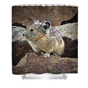 Pika - Weminuche Wilderness - Colorado Shower Curtain