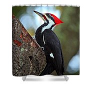 Pilated Woodpecker Shower Curtain