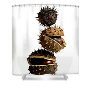 Pile Of Chestnuts Shower Curtain