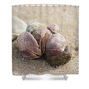 Pile-up On The Beach Shower Curtain