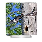 Pileated #27 Shower Curtain