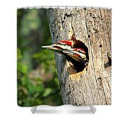 Pileated #29 Shower Curtain