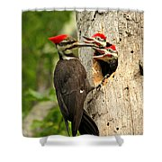 Pileated #30 Shower Curtain