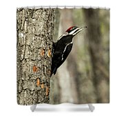 Pileated About To Take Flight Shower Curtain