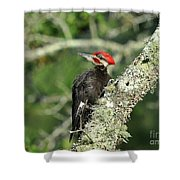Pileated Perch Shower Curtain