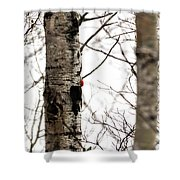 Pileated Shower Curtain