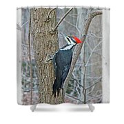 Pileated Woodpecker - Dryocopus Pileatus Shower Curtain