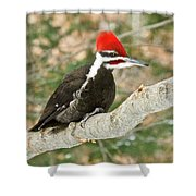 Pileated Woodpecker 6073 Shower Curtain