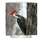 Pileated Woodpecker In Spring Shower Curtain