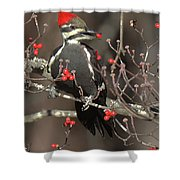 Pileated Woodpecker Lunch Shower Curtain