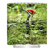 Pileated Woodpecker On The Ground No. 1 Shower Curtain