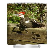 Pileated Woodpecker1 Shower Curtain
