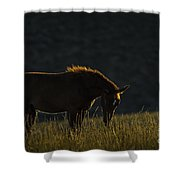 Pilot Butte Wild Horse Shower Curtain