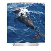 Pilot Whale 3 Shower Curtain