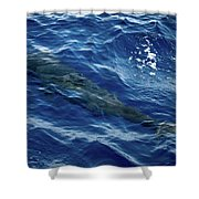 Pilot Whale 4 Shower Curtain