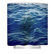 Pilot Whale 9 The Mermaid  Shower Curtain