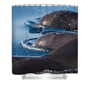 Pilot Whales 1 Shower Curtain