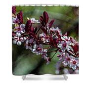 Pin Cherry Blossoms Shower Curtain