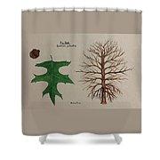 Pin Oak Tree Id Shower Curtain