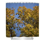 Pin Oaks In The Fall No 1 Shower Curtain