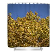 Pin Oaks In The Fall No 2 Shower Curtain