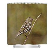 Pine Chirper Shower Curtain