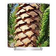 Pine Cone Art Prints Pine Tree Artwork Baslee Troutman Shower Curtain