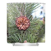 Pine Cone. Shower Curtain