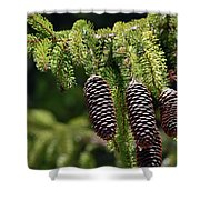 Pine Cones On The Bough Shower Curtain